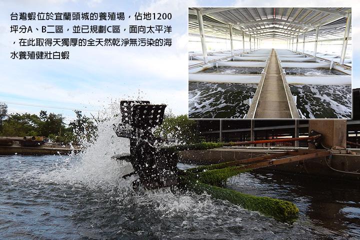 台灣蝦位於宜蘭頭城的養殖場,佔地1200坪分A、B二區,並已規劃C區,面向太平洋,在此取得天獨厚的全天然乾淨無污染的海水養殖健壯白蝦