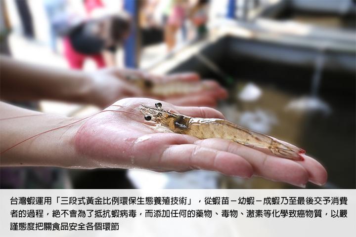 台灣蝦運用「三段式黃金比例環保生態養殖技術」,從蝦苗-幼蝦-成蝦乃至最後交予消費者的過程,絕不會為了抵抗蝦病毒,而添加任何的藥物、毒物、激素等化學致癌物質,以嚴謹態度把關食品安全各個環節