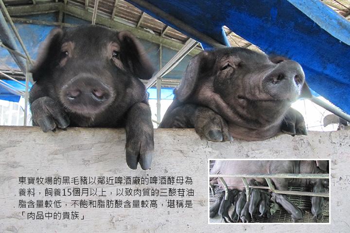 東寶牧場的黑毛豬以鄰近啤酒廠的啤酒酵母為養料,飼養15個月以上,以致肉質的三酸苷油脂含量較低,不飽和脂肪酸含量較高,堪稱是「肉品中的貴族」
