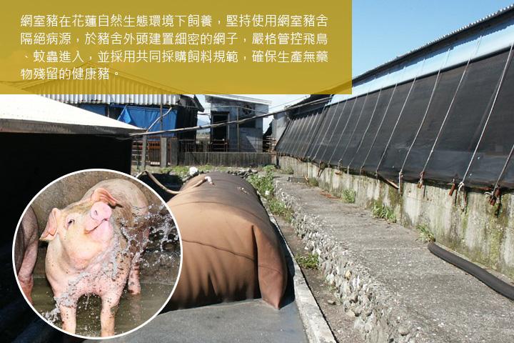 網室豬在花蓮自然生態環境下飼養,堅持使用網室豬舍隔絕病源,於豬舍外頭建置細密的網子,嚴格管控飛鳥、蚊蟲進入,並採用共同採購飼料規範,確保生產無藥物殘留的健康豬。
